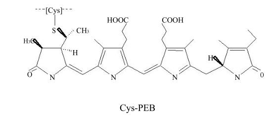 藻红蛋白(R-PE)结构式