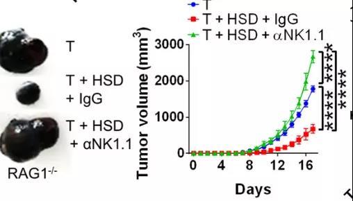 高盐饮食诱导的肿瘤免疫由NK细胞频率增加介导