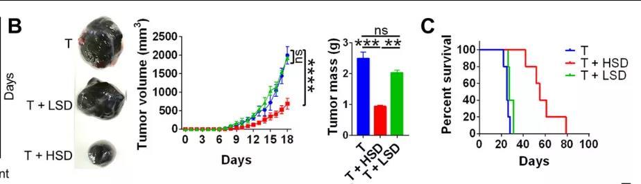 高盐饮食诱导有效的肿瘤免疫