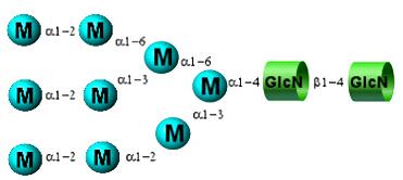 Permethylated N-Glycan standards 全甲基化N-多糖标准品