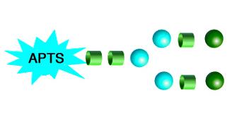 APTS Labeled N-Glycans APTS标记N-多糖