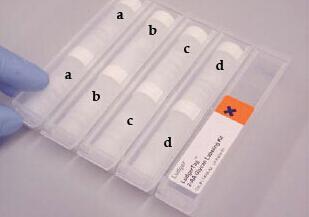 Glycan Labeling Kits 多糖标记试剂盒